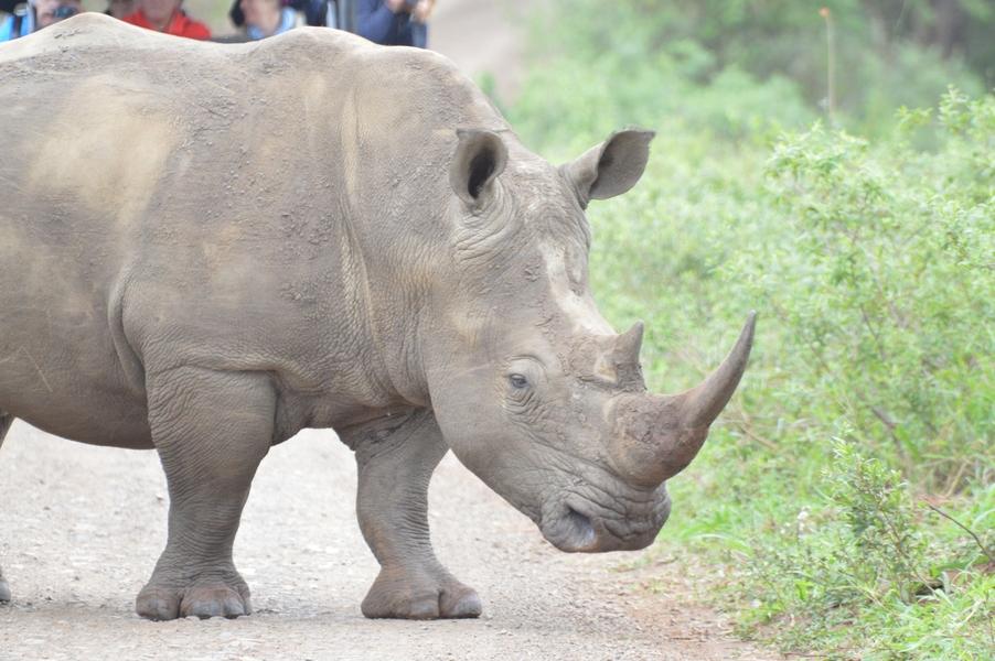 rhino hluhluwe (1)