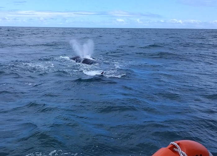baleines baket 6