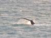 baleine nageoire dorsale et soleil