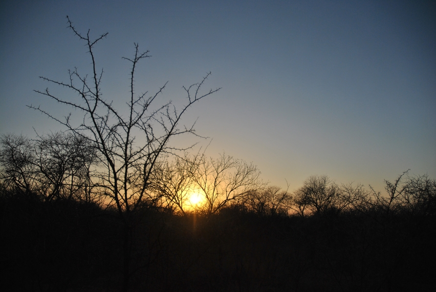 Karongwe coucher soleil bush