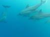 dauphin-maurice5