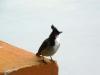 grand-bassin-oiseau