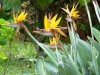 rhumerie-chamarel-fleurs