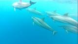 dauphin-maurice8