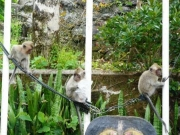 grand-bassin-singes