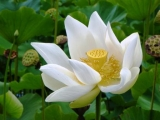 jardin-botanic-pamplemousse-7