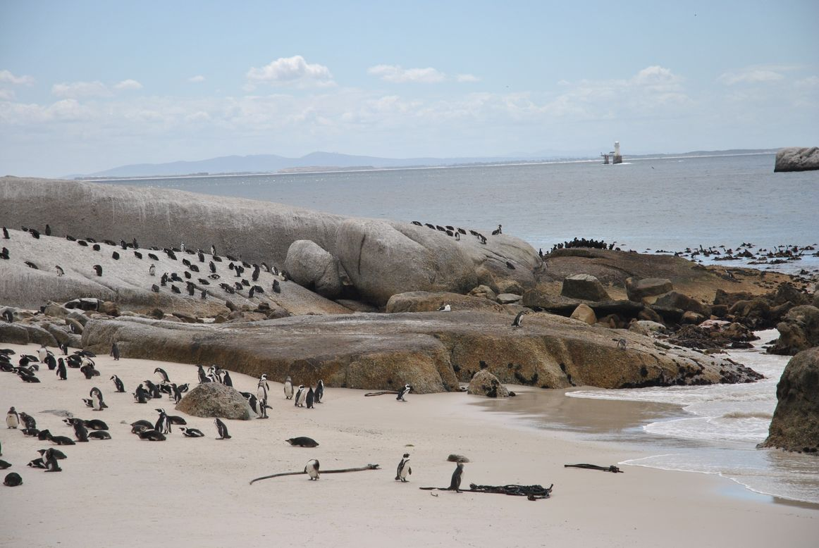 boulders beach (9)
