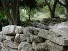 tulum ruines cameleon