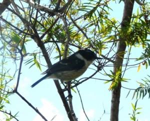 oiseau plaine