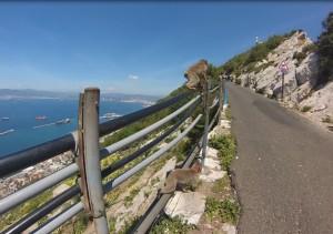 Gibraltar en haut du rocher avec singes