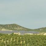 Oliviers et panneaux solaires