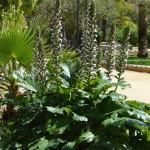 Seville jardin murillo