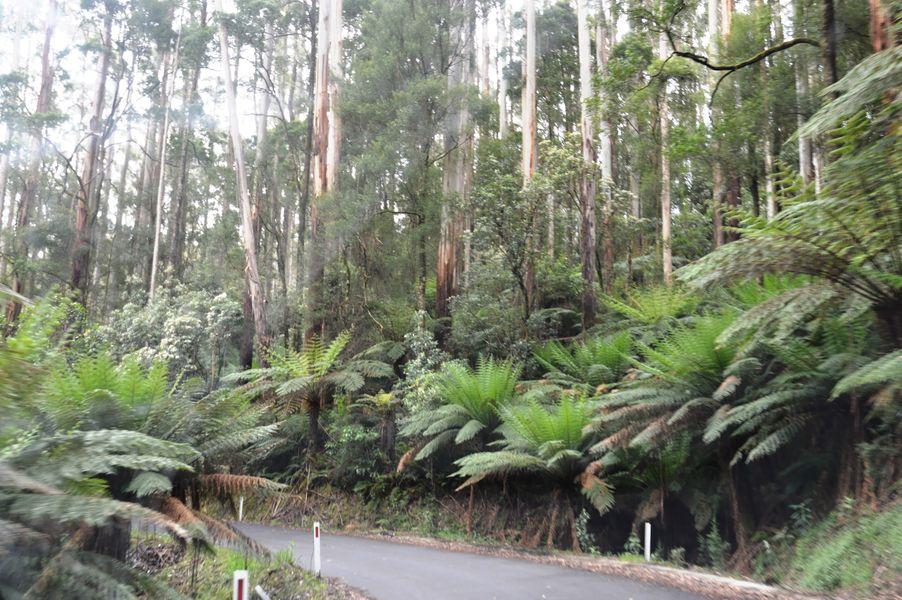 forêts tropicales du Great Otway National Park
