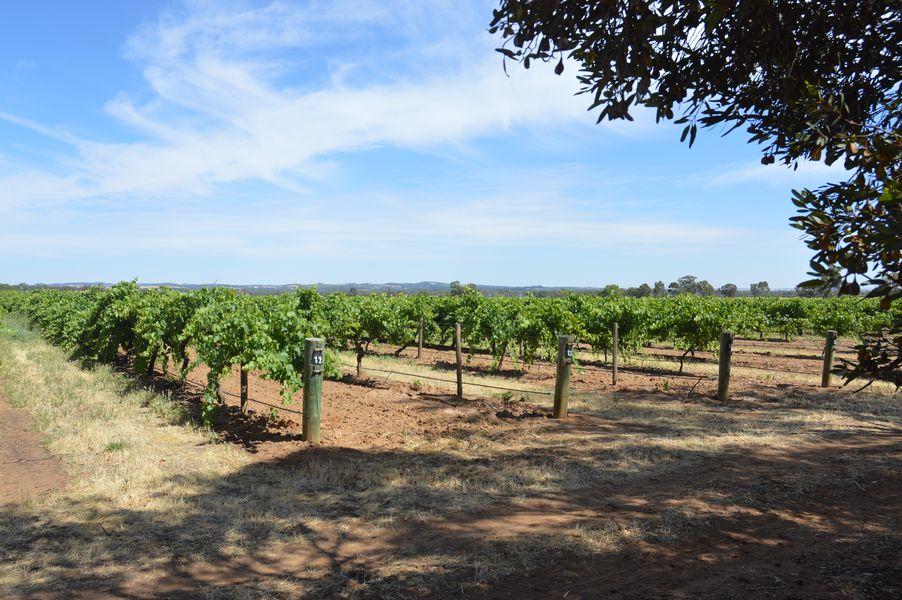 barossa farmers market vigne