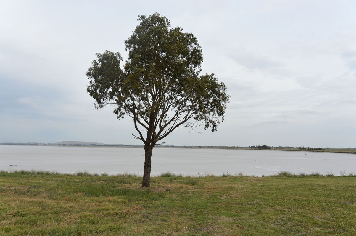 Beeac lac salé arbre