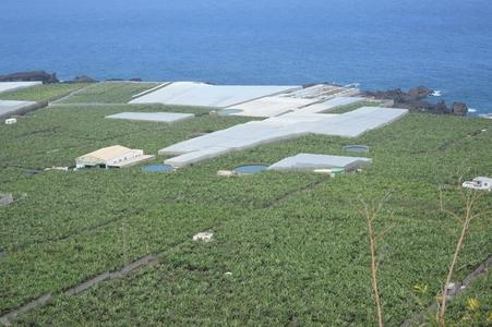 champs de bananiers dans le sud