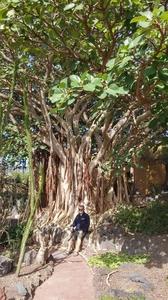 jardin botanique Gran Canaria (47)