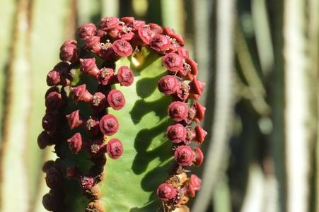 jardin botanique Gran Canaria fleurs cactus