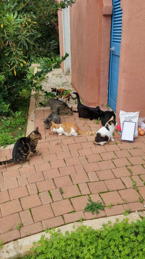 sampieri-appart avec chats