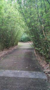 MASCARIN LE JARDIN BOTANIQUE bambous allée