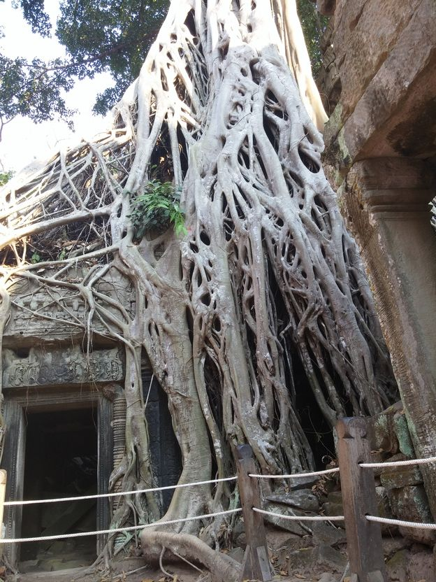 Ta prohm - Angkor (10)