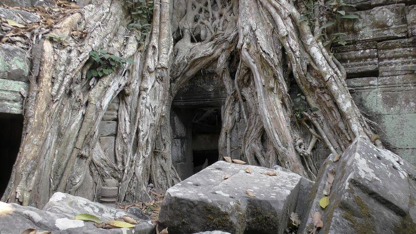 Ta prohm - Angkor (4)