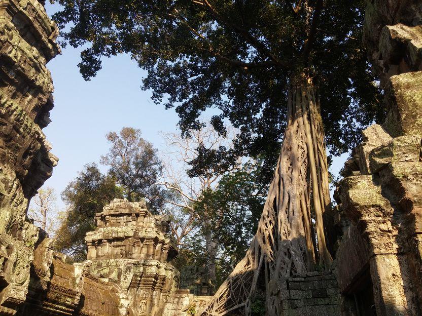 Ta prohm - Angkor (9)