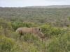 rhino hluhluwe 2