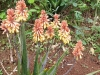 Blyde river-horse shoe falls cactus