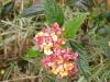 Blyde river-horse shoe falls fleur