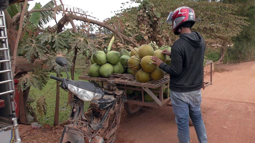 Kampot-campagne-noix-coco