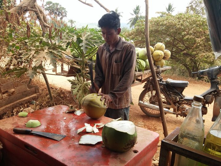 kampot-campagne-noix-coco-1