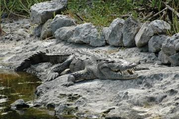 cozumel-la-lagune-colombia-et-ses-crocodiles