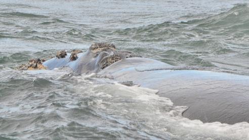 baleines (11)
