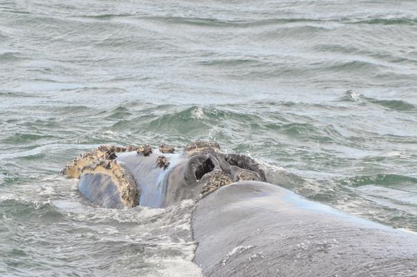 baleines (4)