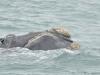 baleines (9)
