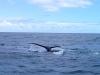 baleines baket 4