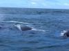 baleines balet (2)