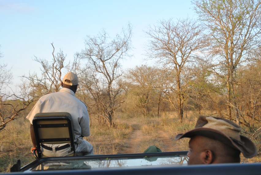 Karongwe pister soleil