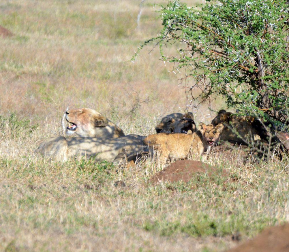 lions repos kruger