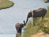 Elephant crocodile river kruger