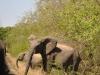 Elephant sur la route kruger