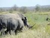 rhino de dos kruger