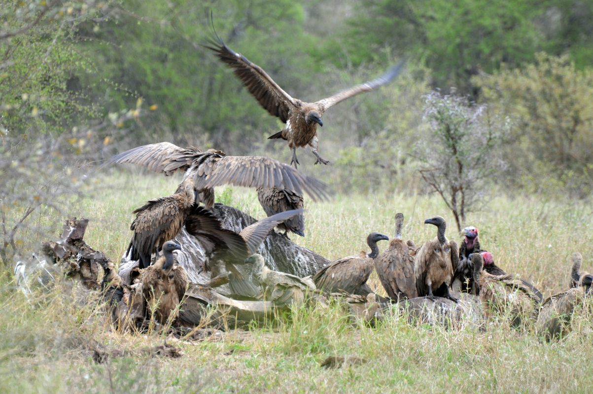 rapace groupe kruger
