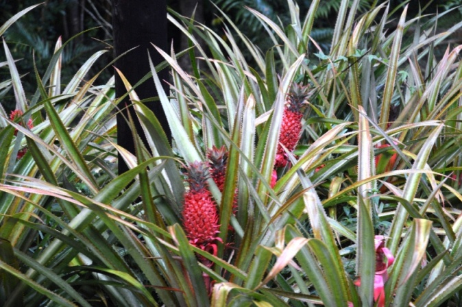chamarel-ananas