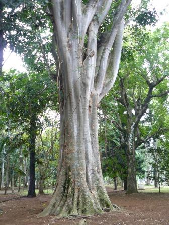 jardin-botanic-pamplemousse-4