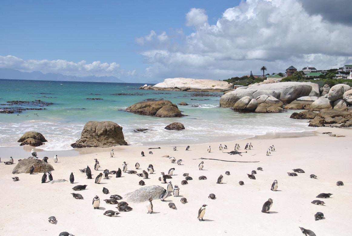 boulders beach (3)