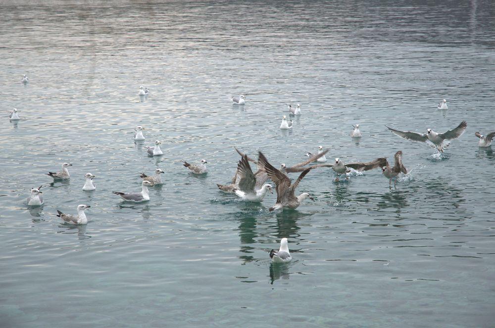 Primosten oiseaux croatie