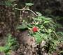 rando-fraises