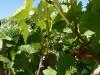 10 octobre route des vins (8)